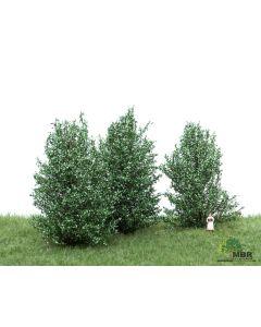 Busker, MBR-Model-50-4003-high-bushes-white-green-3-pcs, MBR50-4003